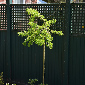 Plant Photo